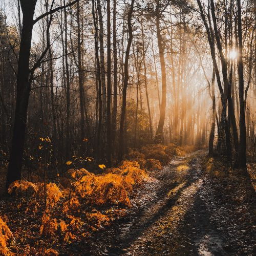 magical-sunlight-in-autumnal-forest-at-misty-morni-8BP6E39-min