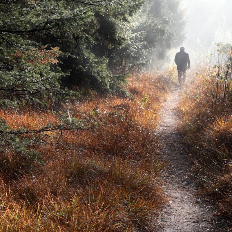 man-walks-on-forest-path-in-fog-P4RB8H2-min